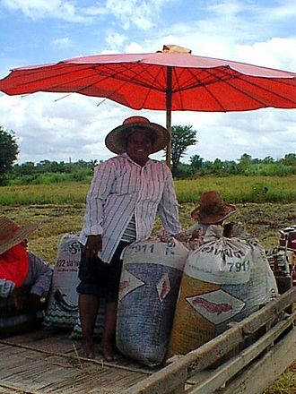Rice production in Thailand - Rice harvest on farm in Ban Sam Ruen, Phitsanulok