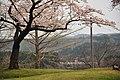 120430花見 - panoramio (1).jpg