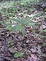 14.05.2006 - територія заказника Чернечий ліс (3).jpg