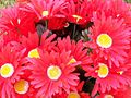 1461935 Fall-daisy-decorations 620.jpg