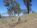 1840 - Military Station Archaeological Site and Burial at Glenroy - Grave of Eliza Rodd (5052015b2).jpg