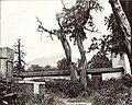 1907年9月11日岱庙内被誉为有2000年历史的汉柏.jpg
