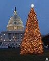 2003 U.S. Capitol Christmas Tree (31805187755).jpg