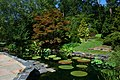 2008-07-24 Lily pond at Duke Gardens 3.jpg