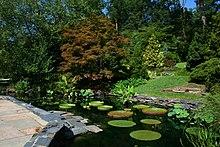 Un estanque de Lilly y de la pasarela lapidado con varios árboles en el fondo