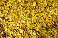 20121029020DR Dresden-Südvorstadt Beutlerpark Herbst.jpg