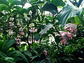 2012 kveten botanicka zahrada 082.jpg