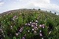 2013-10-14 花いっぱいの地球 - panoramio.jpg