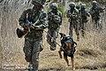 2013. 5 201특공여단 독수리 전문유격훈련. 201 Commando Brigade, Eagle guerrilla training. (8715133149).jpg
