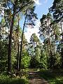 20130731Speyrer Wald34.jpg