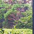 20160128 Sri Lanka 4101 crop Sinharaja Forest Reserve sRGB (25769572695).jpg