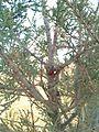 3محمية برية ،سبدو، الجزائر.jpg