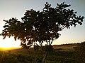 3مزرعة في بلدية أغلال ، عين تموشنت ، الجزائر.jpg