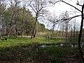3528. Bolshaya Izhora. Suburban reserve.jpg