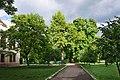 46-101-5050 Гінкго дволопатеве біля палацу Туркулів-Комелло.jpg