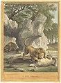 A.-J. de Fehrt after Jean-Baptiste Oudry, Le lion (The Lion), published 1759, NGA 55520.jpg