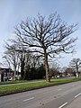 A34 Birmingham tree - 2021-02-12 - Andy Mabbett - 01.jpg