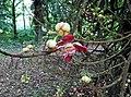 A FLOWER FROM BOTANICAL GARDEN SHIBPUR, WB.jpg