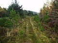 A Forest Road - geograph.org.uk - 75188.jpg