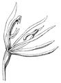 A Sketch of the Vegetation of the Swan River Colony - Figure 4.png