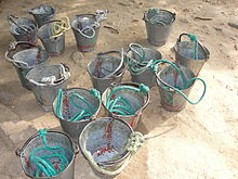 A view of rental buckets for devotees in Siththar Temple, Salem.JPG