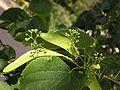 Ab plant 109.jpg
