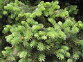 Ab plant 526.jpg