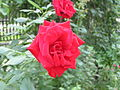 Ab plant 844.jpg