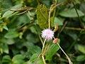 Aburi garden 10.jpg