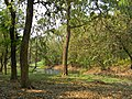 Acharya Jagadish Chandra Bose Indian Botanic Garden - Howrah 2011-03-20 2015.JPG
