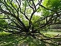 Acharya Jagadish Chandra Bose Indian Botanic Garden - Howrah 2011-03-20 2105.JPG