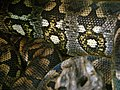 Acrantophis dumerili Ile aux Serpents 201108 2.jpg