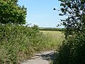Across fields at Flemingston to Cardiff Airport - geograph.org.uk - 856660.jpg