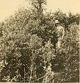 Acta Soc. pro Fauna et Flora Fennica (1912) (16770869011).jpg