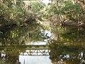Alafia River at FishHawk, Florida.JPG