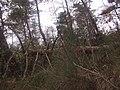 Albero secco nei pressi di Ottavo Vecchio - panoramio.jpg