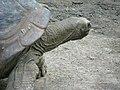 Aldabra1.jpg