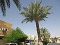 Algérie Wilaya de Ghardaïa - panoramio (272).jpg