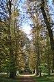 Allées dans le parc de la Colombière à Dijon.JPG