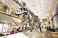 Allosaurus, Vienna-067 (33059964506).jpg