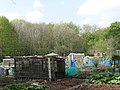 Allotments in Jesmond Vale (2) - geograph.org.uk - 1389928.jpg
