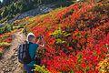 Along the Ptarmigan Ridge trail…Sanne…amazing autumn foliage (8124198471).jpg