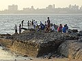 Along the Seafront - Mahim (West) District - Mumbai - Maharashtra - 03 (26098789750).jpg