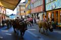 Alpabzug duch die Hauptstrasse in Appenzell.png