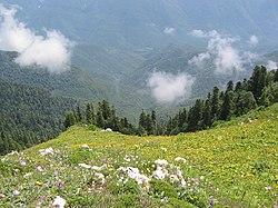 Alpine meadows near Gagra.jpg