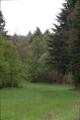 Alsfeld Altenburg SCI 555520578 Wald zwischen Romrod und Ober-Sorg NE d.png