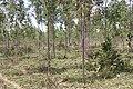 Alto Araguaia - State of Mato Grosso, Brazil - panoramio (1205).jpg
