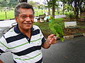 Amazona aestiva -pet perching on hand-8b.jpg