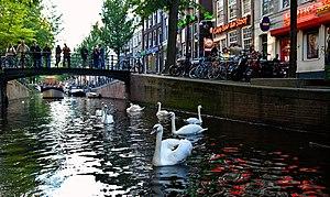 Amsterdam swans 2010 0903.jpg