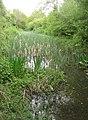 An overgrown Basingstoke Canal - geograph.org.uk - 1671213.jpg
